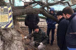 Экологи в Киеве взялись спасать историческую липу Петра Могилы
