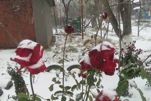 """Киев """"поделился"""" снегом с Балтой и Мариуполем: опубликованы фото"""