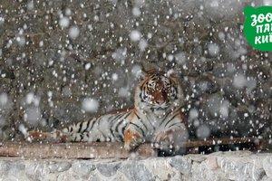 Столичный зоопарк показал, как звери встретили первый снег