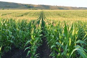 Украинскую агропродукцию оценили в 200 странах мира