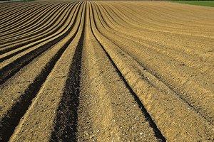 В Винницкой области селяне пытаются забрать у фермера свои паи