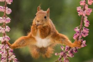 Выбраны самые смешные фото животных 2018 года