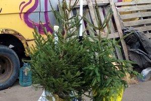 В Бердянске начали продавать новогодние елки