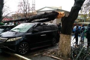 В Одессе на машины рухнула огромная ветка: опубликованы фото
