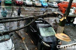 Непогода в Одессе: ветер валил деревья, а дождь заливал улицы