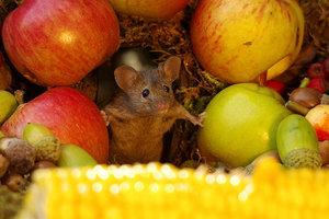 Мужчина пожалел мышей в саду и построил для них невероятные домики: фото