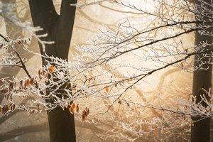 29 ноября: какой сегодня праздник, приметы, что нельзя делать