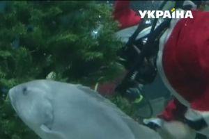 Санта в окружении акул и паб-елка: как мир готовится к Рождеству