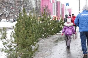 Где в Киеве купить новогоднюю елку: в Киевраде вывесили список локаций