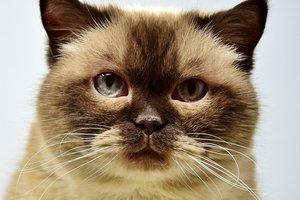 """Забавное видео с котом и беговой дорожкой """"взорвало"""" сеть"""