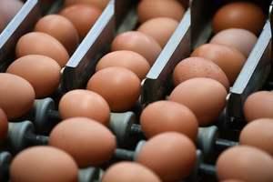 Украинские яйца появятся в магазинах Марокко