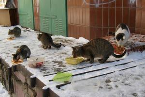 Коты не стали частью экосистемы Киева: животные гибнут из-за равнодушия граждан