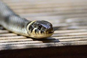 Во Львовской области на мужчину напала змея