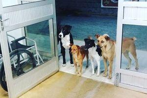 Собаки на фото покорно ждали своего бездомного хозяина у больницы