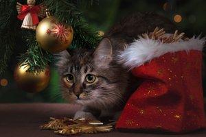 Сколько новогодних елок продали в Украине: озвучена статистика