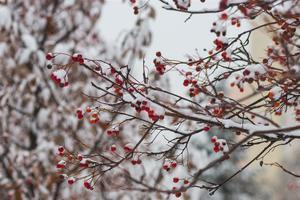 Синоптики рассказали, когда в Киеве закончится снегопад