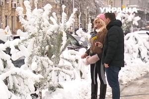 В Украине стартовали продажи елок: как правильно выбрать и сколько придется заплатить