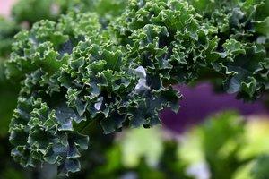 Тайны суперфуда: чем полезна капуста кале и что из нее приготовить для похудения