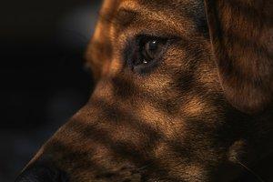 Сила заботы: полумертвая собака на фото изменилась до неузнаваемости