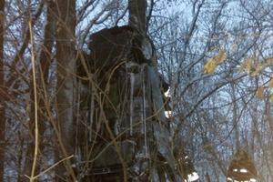 Под Киевом машина застряла на дереве