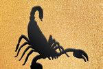 Гороскоп на 2019 год для Скорпионов. Фото: Сегодня