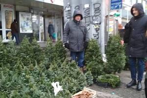 Елки в Киеве: сколько стоят новогодние деревья