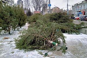 Почем елки в Днепре: с чипами и без