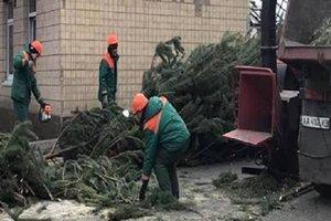 В Киеве сдать новогоднюю елку можно в 15 пунктах