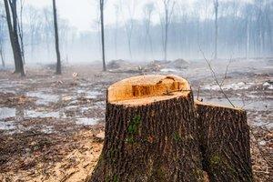 Во Львовской области на глазах у отца дерево убило молодого парня