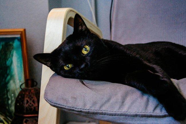 Назапись шоу оядерной войне заявился черный кот