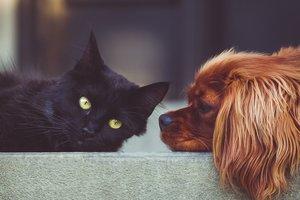 Кошка трогательно обняла пса и попала на курьезное видео