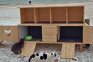 На пляже в Одессе появилось общежитие для котов
