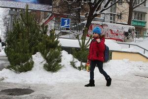 В Киеве 15 пунктов собирают новогодние елки