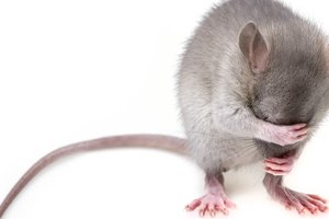Эксперт предупредил о нашествии мышей в квартирах киевлян