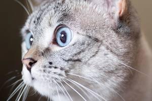 Показали самого популярного в интернете кота: забавные фото