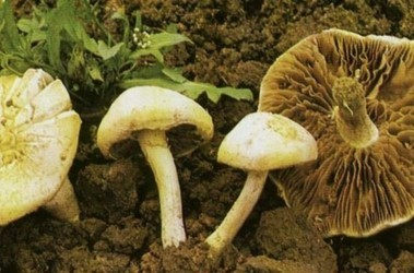 фото mushrooms-online.ru