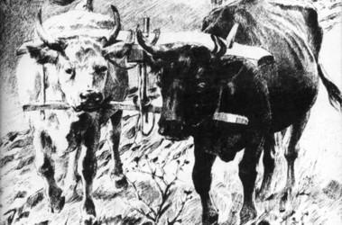 год быка под знаком тельца