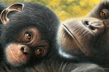 детёныш шимпанзе фото