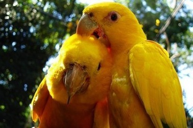 Попугай прогнал воров из зоомагазина.