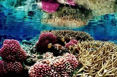 Флора тихого океана доклад