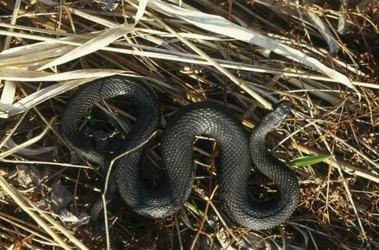 змеи одесской области фото