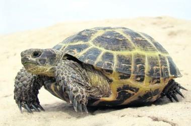 сухопутные черепахи. фото