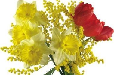 Где можно купить мимозы цветы где в москве купить цветы оптом