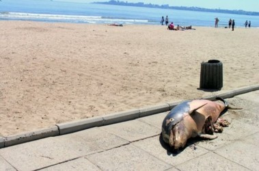 Пляжи Одессы подробный обзор 39