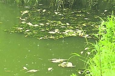 На западе Украины массово дохнет рыба: но купаться и ... всплывать