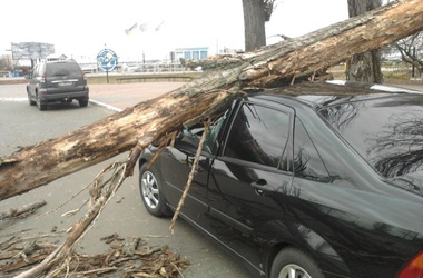 На Крещатике дерево расплющило 7 автомобилей