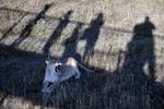 По Крыму свободно разгуливают львы и носороги