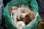 Если после грибов болит живот, нужно бежать к врачу