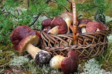 Какие грибы называют