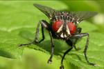 """В  """"Большом порту Санкт-Петербурга """" в партии клементинов из Марокко обнаружены личинки плодовой мухи."""
